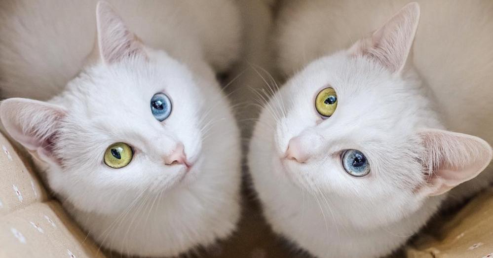 twincats.png