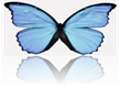 Chrysalis Company Logo.png